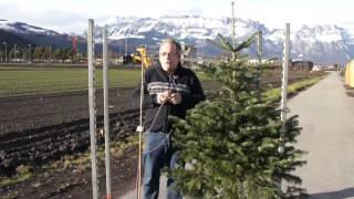 #542 Die Geschichte vom Weihnachtsbaum