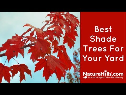 Top 5 Best Shade Trees For Your Yard | NatureHills.com