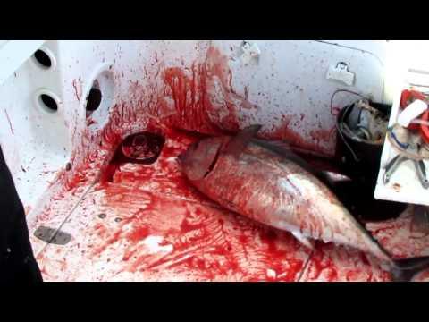 Bloody deck on X-TA-SEA