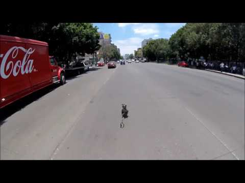 Dog on the loose in Mexico City