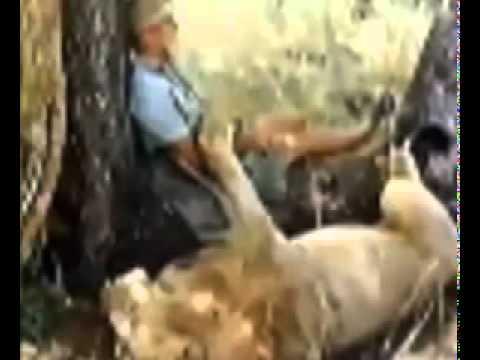 Video cảm động về chú sư tử Christian Lion