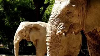 Крупное дело: слоны судятся с аргентинским зоопарком