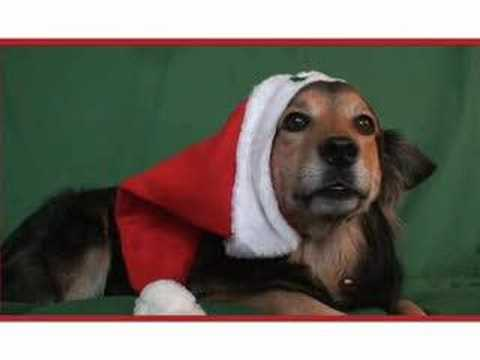 Merry Puppy Christmas :: A Singing Dog Holiday Greeting