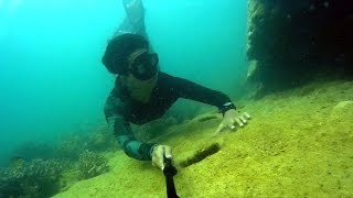 Gemia Island Malaysia  city photos gallery : Gemia Island & Kapas Island, Malaysia | Freediving Experience