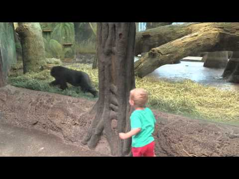 Toddler playing Gorilla Toddler at the Columbus Zoo!