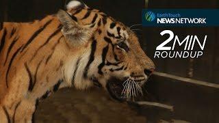 Nonton Biggest Wildlife Stories Of 2016 Film Subtitle Indonesia Streaming Movie Download