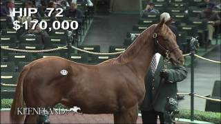 HnR 's Sulis 16 weanling filly by Scat Daddy Hip 72 Keeneland Nov 2016