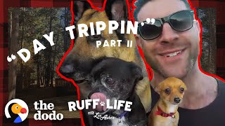 Lee Sneaks His 9 Dogs Into A Hotel — And Rescues 16 More | Ruff Life With Lee Asher by The Dodo