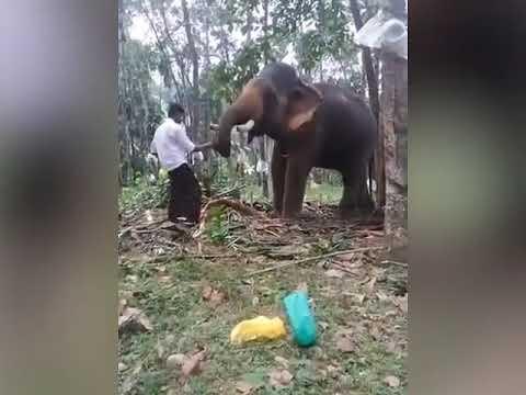 العرب اليوم - شاهد: فيل ضخم ينتقم من رجل حاول تقبيله