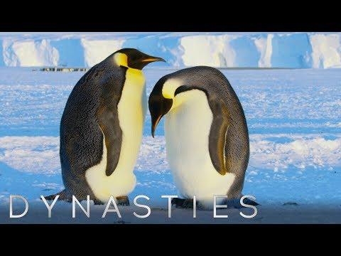 סרטוני טבע של ה-BBC: פינגווינים