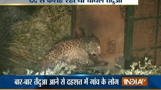 Dewas India  city photos gallery : Wounded Leopard found at Limboda Village in Dewas - India TV
