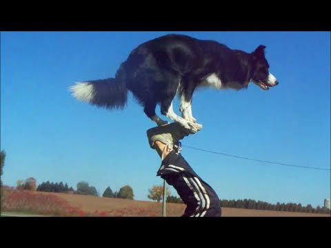 border collie: un cane molto intelligente