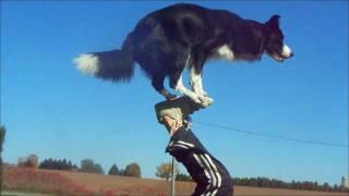Nina en vidéo : ce chien est intelligent pour ne pas dire hallucinant