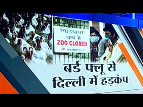 SC pulls up Delhi govt over garbage disposal systems amid bird flu scare