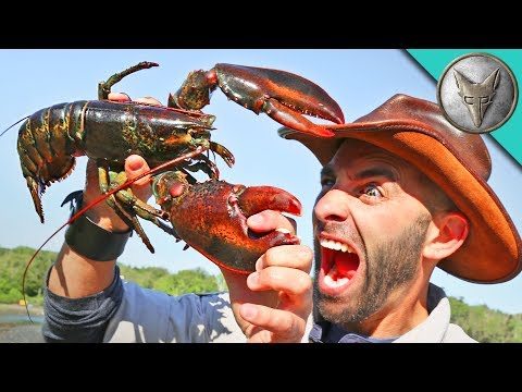 PINCHED by a LOBSTER!