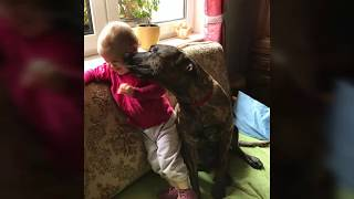 """cute Dogo Canario & adorable Baby - sweet dog and a beautiful child, We love our Dogo Canario - lovely Video """"dog & child"""""""