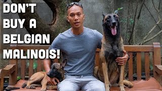 Video JANGAN BELI ANJING KAYAK SPARTA/ANUBIS!! MP3, 3GP, MP4, WEBM, AVI, FLV April 2019