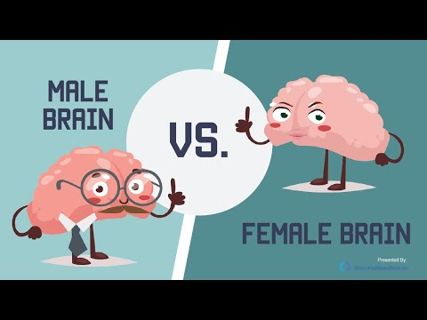 Male Brain vs Female Brain: What is the Big Difference?