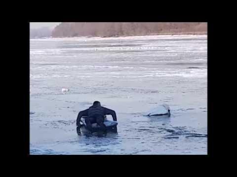 Spasavanje labudova iz Dunava
