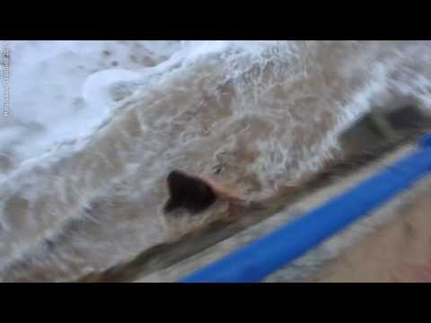 海浪來了還不走!這女的根本智障
