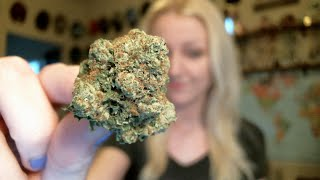 TAMPA DECRIMINALIZED CANNABIS POSSESSION?! | news nug recap | CoralReefer by Coral Reefer
