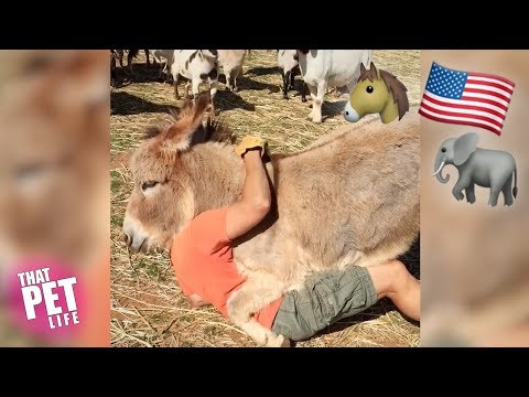 Funny animals - Presidential Pets   Funny Animal Compilation