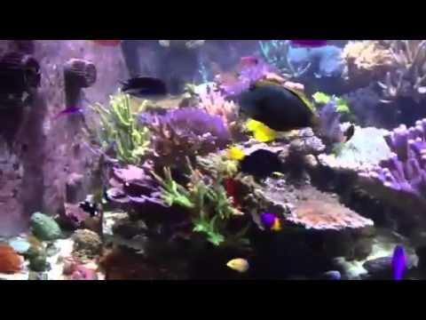 Portfolio Video 17