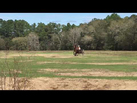 Horse cart driving with Drake in Pensacola