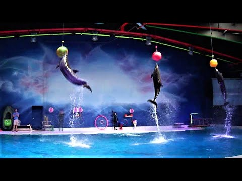 Best Of The Dubai Dolphin Show 2017 HD