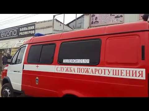 В Дагестане сажают семена деревьев, привезенных из Крыма