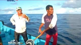 Download Video Hujan Ikan Cakalang di Maluku Utara - Mancing Liar (11/9) MP3 3GP MP4
