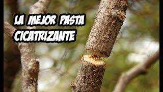 Cómo hacer Pasta cicatrizante o selladora para cortes en ramas de árboles y arbustos. Resiste la lluvia y los hongos, perfecto para cuando realizamos podas y queremos evitar infecciones en nuestras plantas. Cualquier duda la resolvemos en los comentarios.SUSCRÍBETE: http://goo.gl/8sVZ6q.................................................................................................................................Sígueme en las Redes Sociales :Instagram: https://goo.gl/OlvYhTTwitter: https://goo.gl/6nftVyFacebook: https://goo.gl/LpkmbUMi blog: http://www.lahuertadeivan.com.................................................................................................................................Puedes apoyarme en Patreon: https://www.patreon.com/lahuertadeivan