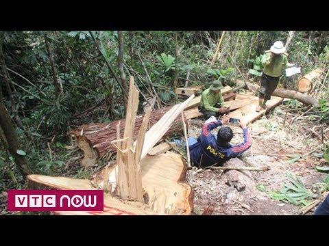 Quảng Nam: Khởi tố 2 vụ phá rừng lớn | VTC1 - Thời lượng: 3 phút, 12 giây.