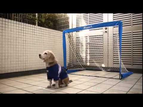 Απίστευτος σκύλος τρεματοφύλακας