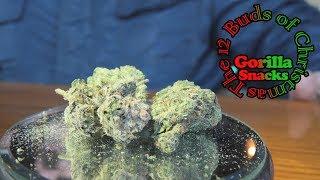 Gorilla Snacks 12 Buds of Christmas by Urban Grower