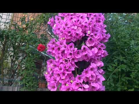 Çiçek Dostum Demet Hanım'ın Bahçesi, Sukulent & Kaktüsleri ve Koleksiyonu   Misafir Bahçeler #10