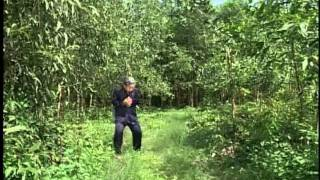 Phim hai - Duong tam dang