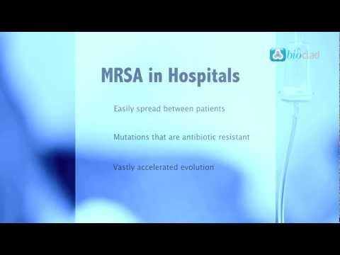 how to treat mrsa in your nose