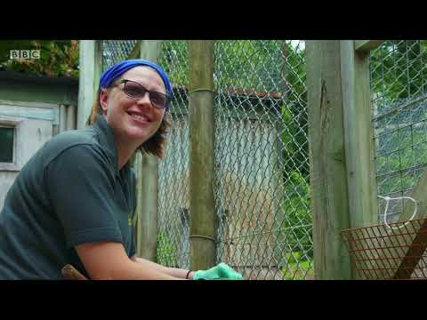 BBC The Zoo series 1 episode 14 Meet the Humans