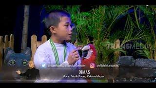 Video Dimas, Bocah PELATIH BURUNG Kakatua Macaw | HITAM PUTIH  (11/09/18) 1-4 MP3, 3GP, MP4, WEBM, AVI, FLV April 2019