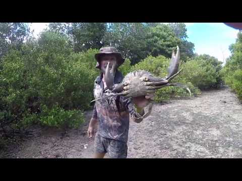 Aussie man teaches you how to catch a mud crab.