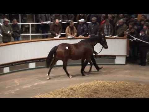 Tattersalls December Breeding Stock Sale 2012 Day 1