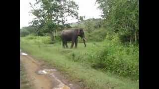 Bandipur India  city pictures gallery : Elephant chase in Bandipur India