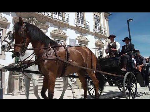 Cavalo foi o centro das atenções na Feira de Santa Cruz - Vídeo