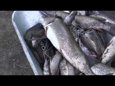 рыбалка селитренное трехречье апрель 2015
