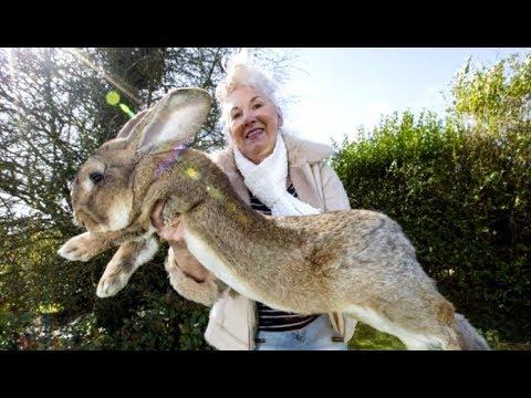 A Really Really Big Bunny