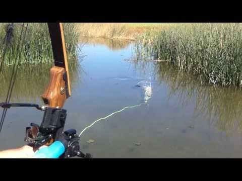 Bowfishing some common carp! Summer 2010