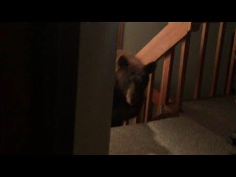 深夜忽然被樓下「傳來怪異的聲響驚醒」,走出房門往下一看…嚇到