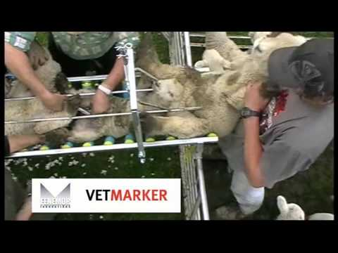 Vetmarker Lamb Docking Contractor