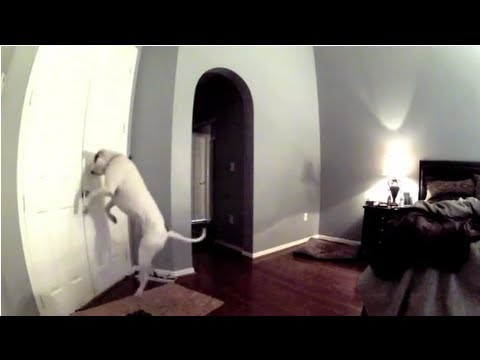 Hidden Camera on Smart Dog! Hilarious! (видео)